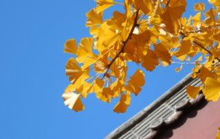 Autumn roof inspection