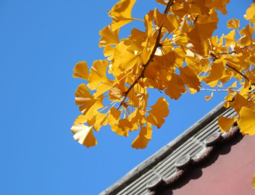 Thermal Roof's Top Autumn Tips for Inspecting your Property
