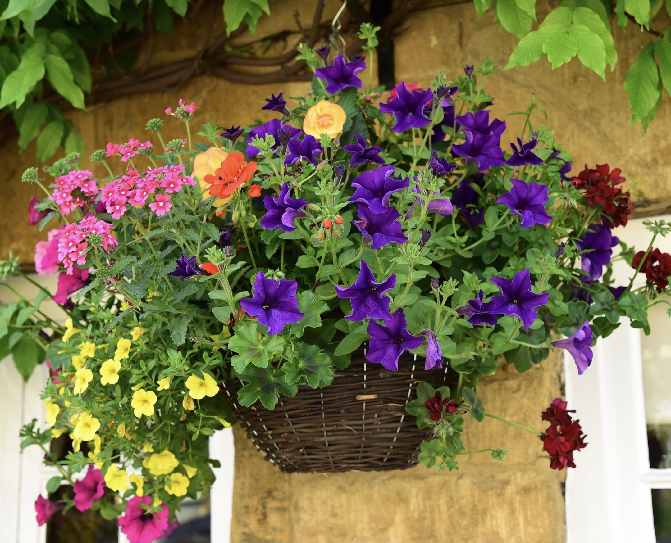 from hanging baskets to conservatory roof replacement